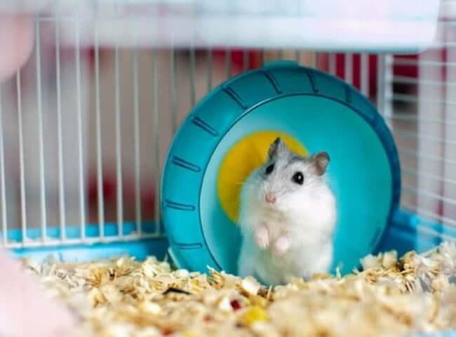 lồng nuôi chuột