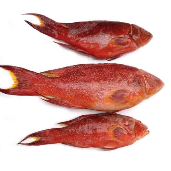 cá mú đỏ giá bao nhiêu