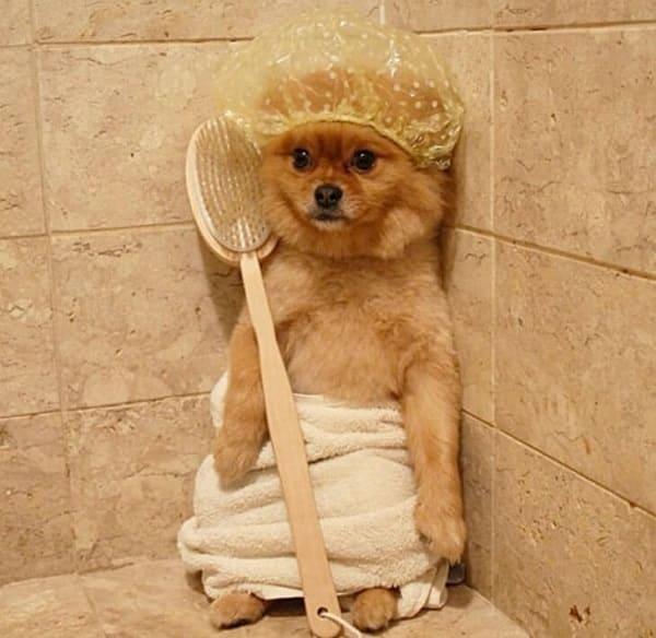 chế độ tắm rửa